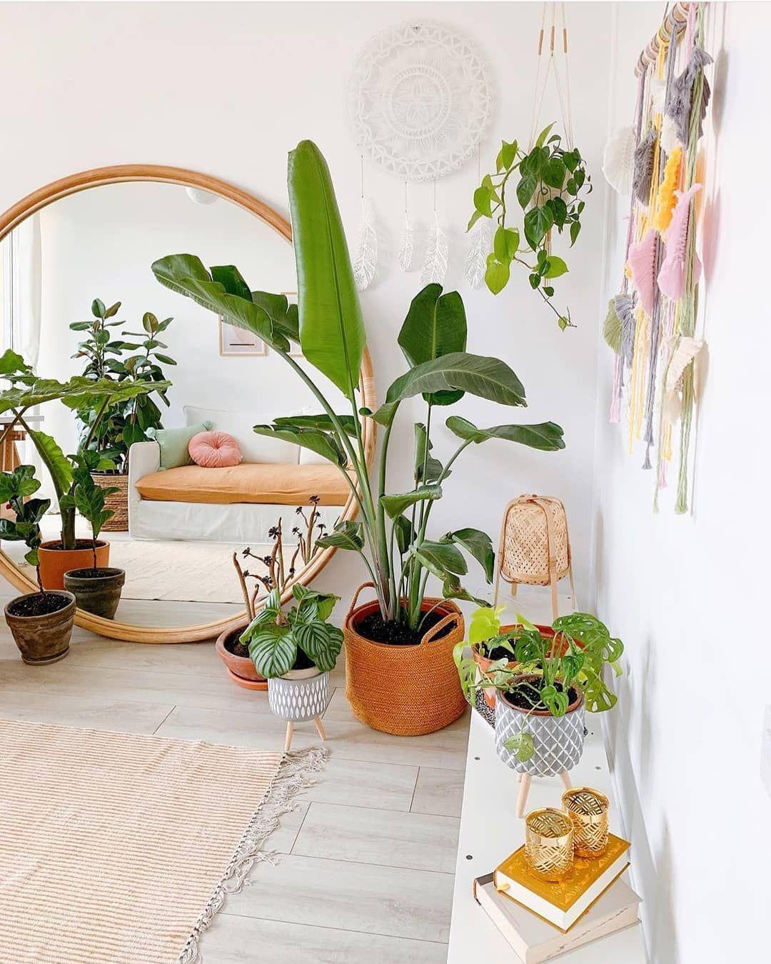 Prenez Soin De Vos Plantes D Interieur Comme Un Pro Creez Votre Jungle Chez Vous Plant House Decor De Chambre Rustique Decoration Elegante Idees De Decor