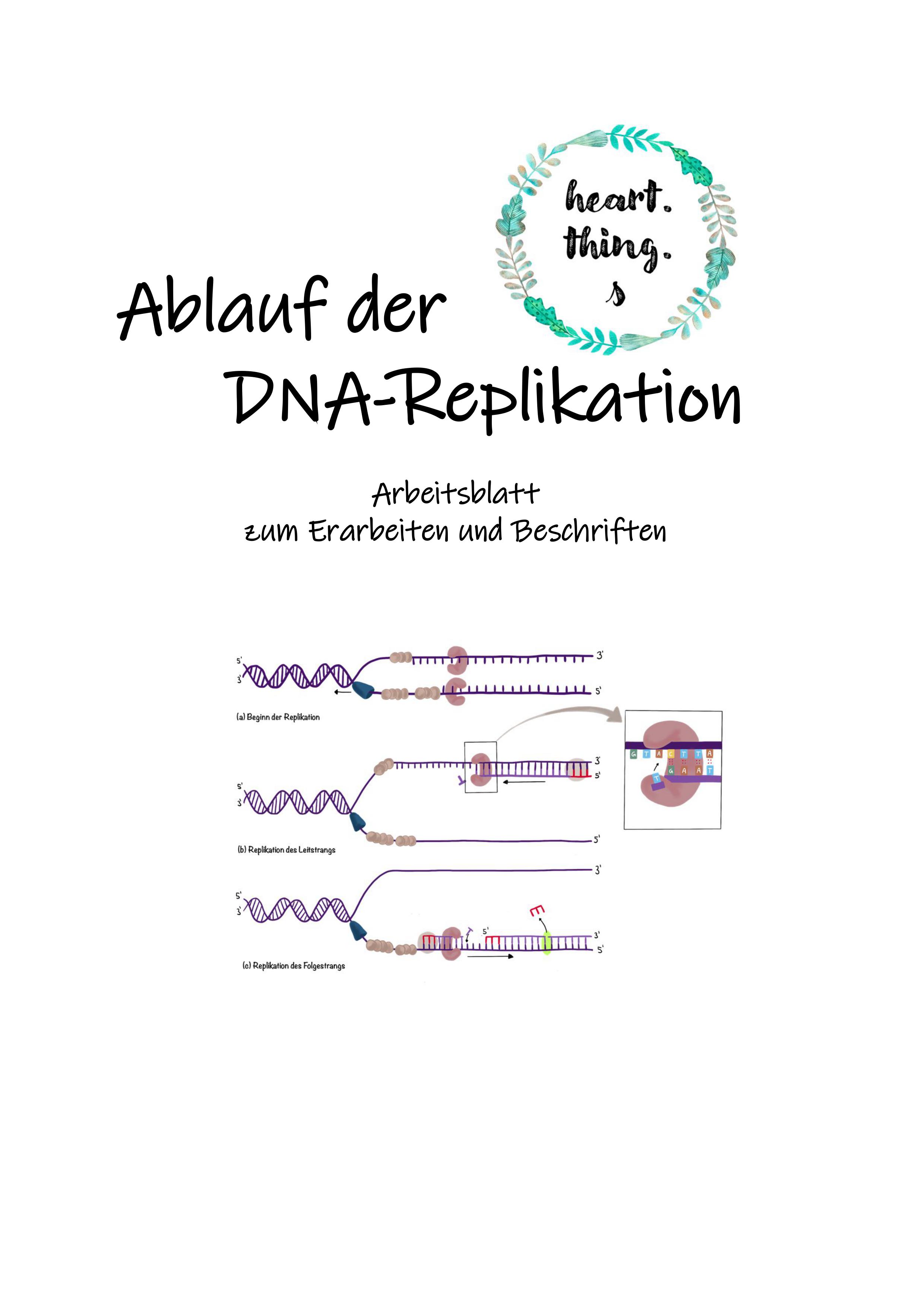 Ablauf der DNA Replikation Leit  und Folgestrang ...