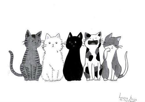 Imagen de cat