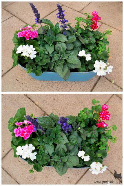 1 Pelargonia Rabatowa Biala I Rozowa 2 Szalwia Ogrodowa Perfect Plants Plants Balcony Plants
