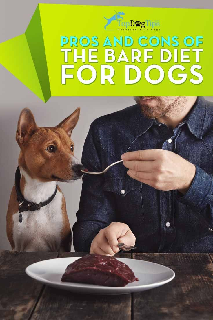 Pros And Cons Of The Barf Diet For Dogs Top Dog Tips Barf Diet Raw Dog Food Diet Raw Dog Food Recipes