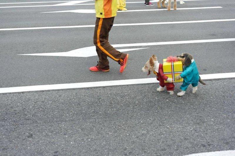 Best doggie costume ever.