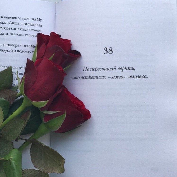 да, цитаты про розу для инстаграмма под фото теле
