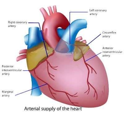 Bangladesh Doctor Information and Health Tips : Cardiology Doctors List in Popular Diagnostic cent...