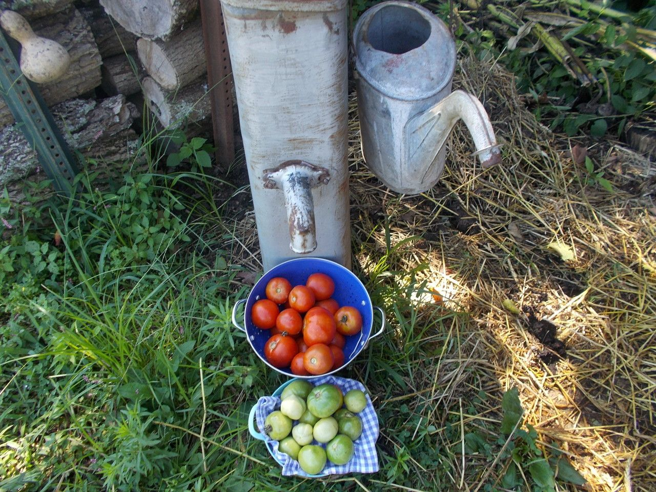 How long does it take tomatoes to grow growing tomatoes