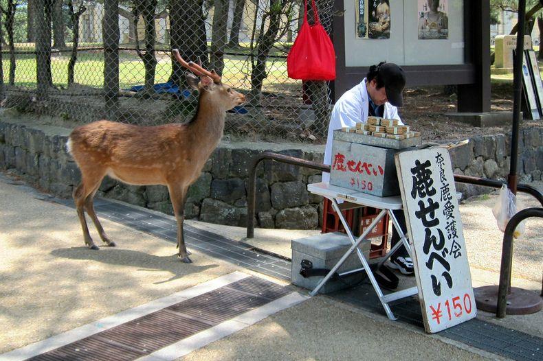 29 Japanese Street Foods (part 2) - Japan Talk