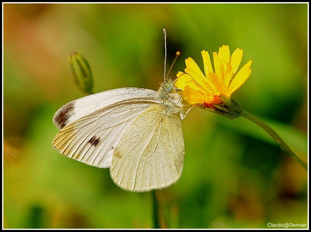 My white butterfly ... #color #white