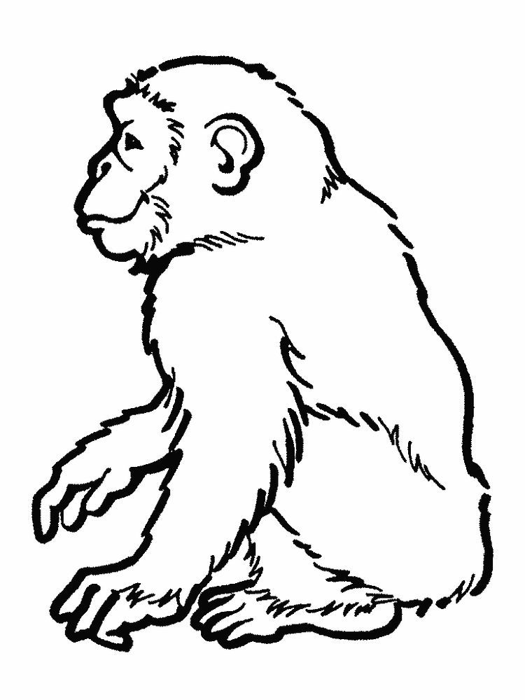 Free Printable Orangutan Coloring Pages Orangutans Are The Only