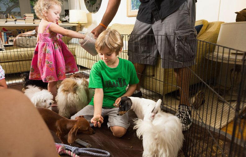 We bring well trained cuddly puppies to enlighten your parties, from kids birthday party to any social coorporate event to shed some puppy love !