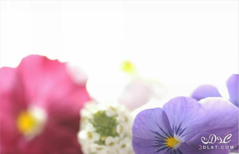 خلفيات للتصميم صور ورود هادئه للتصميم بدون تحميل صور وخلفيات جميله Lei Necklace Plants