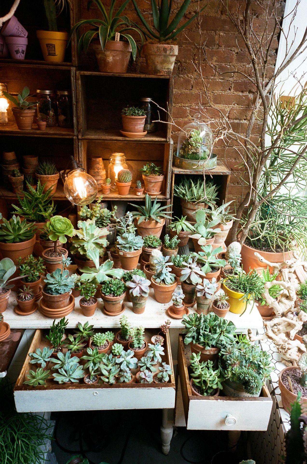 Sunroom Plants Ideas