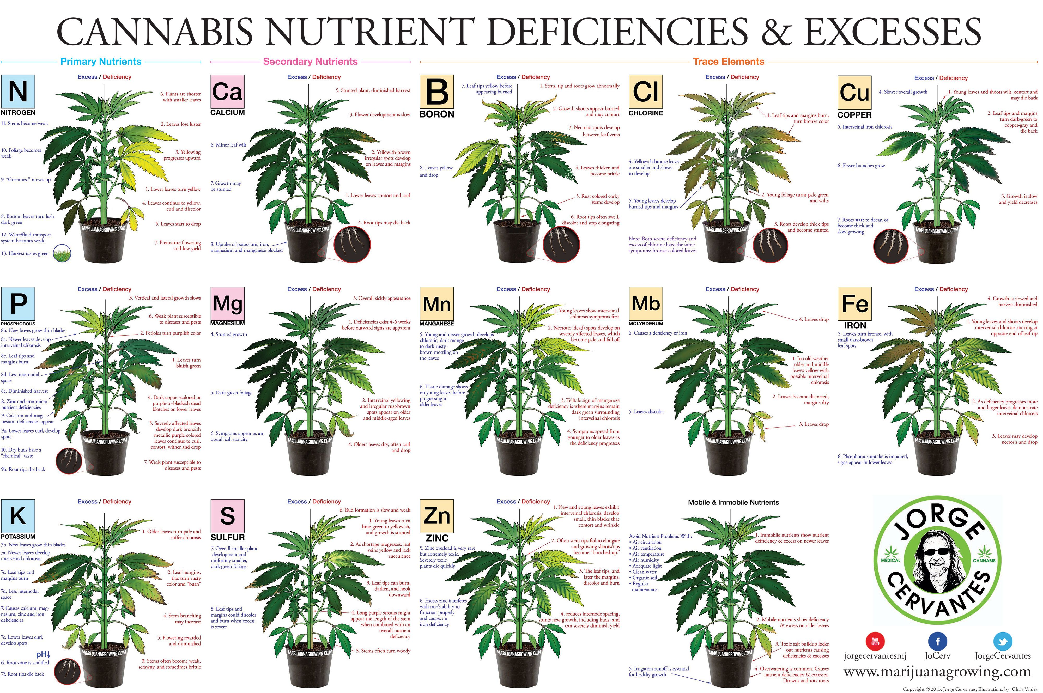 The cannabis encyclopedia book excerpts marijuanagrowing go the cannabis encyclopedia book excerpts marijuanagrowing cannabis growingcannabis plantcannabis cultivationgrowing marijuana indoorchartsmedical nvjuhfo Image collections