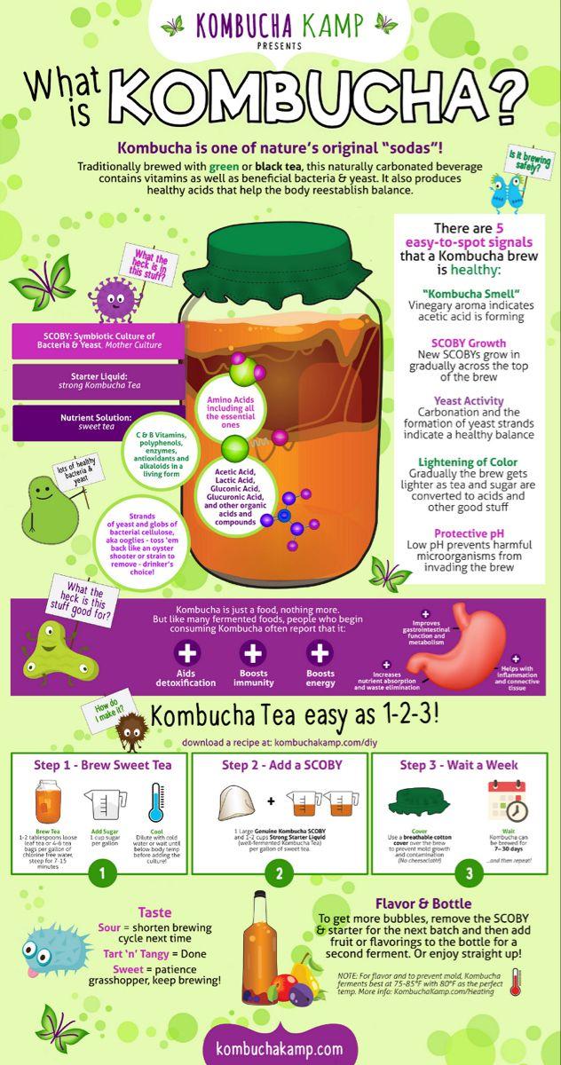 DIY Kombucha - Kombucha DIY Infographic - Kombucha Kamp