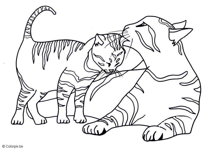 Katze Ausmalbild Mit Bildern Ausmalbilder Katzen Malvorlage