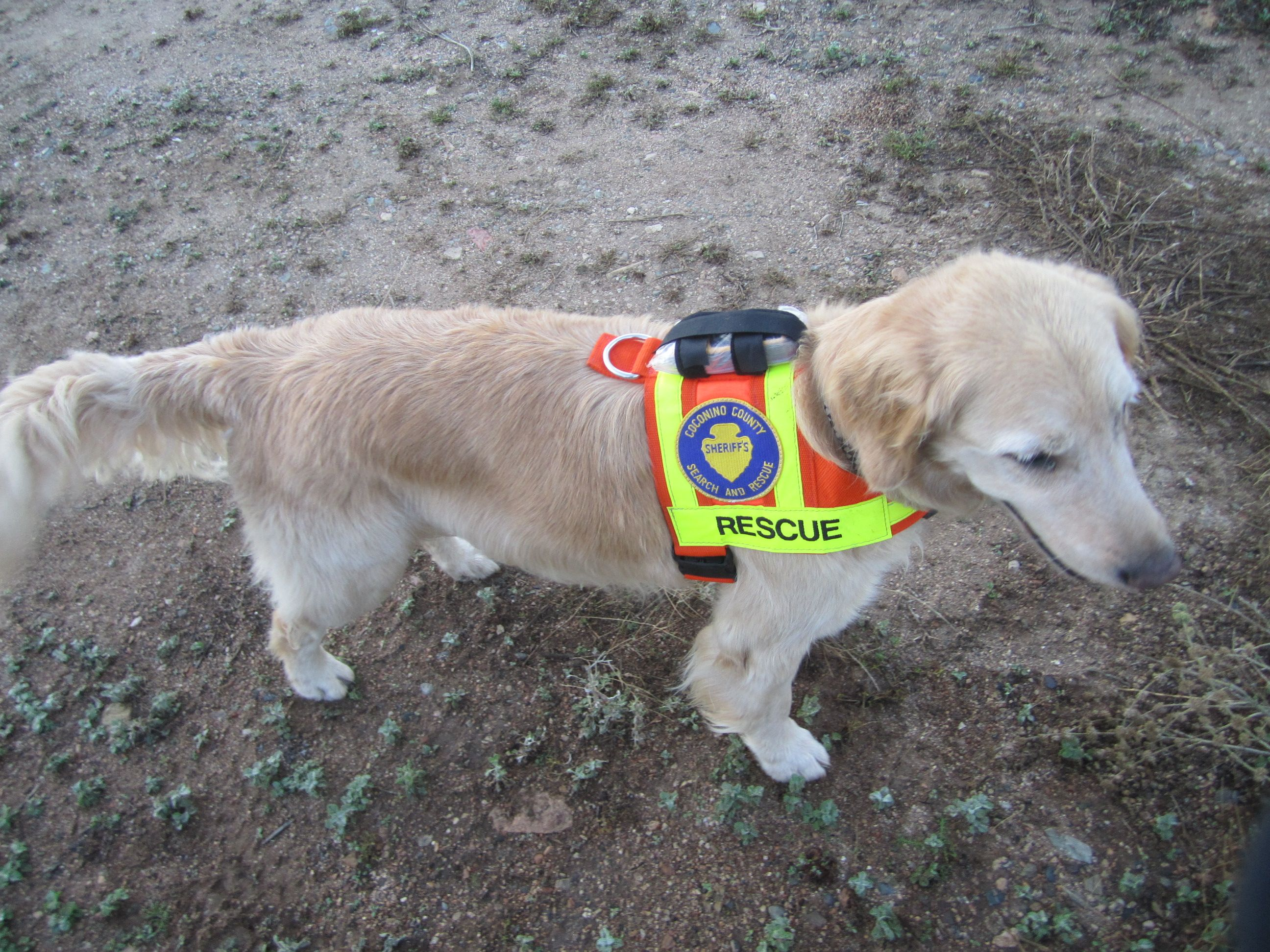 Working With A Search Rescue Dog And K9 Handler On Sar Missions