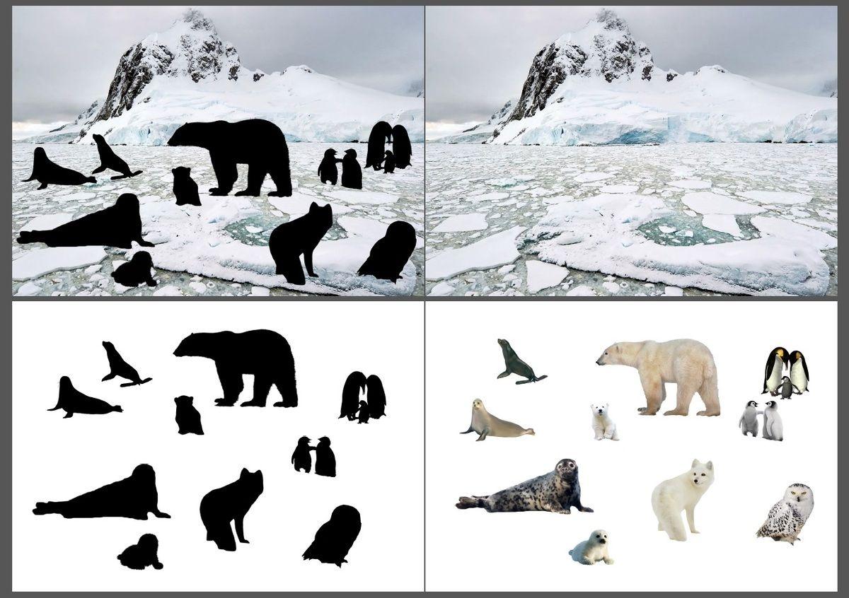 O vis tu les animaux dans leur milieu naturel matern - Animaux pole nord ...
