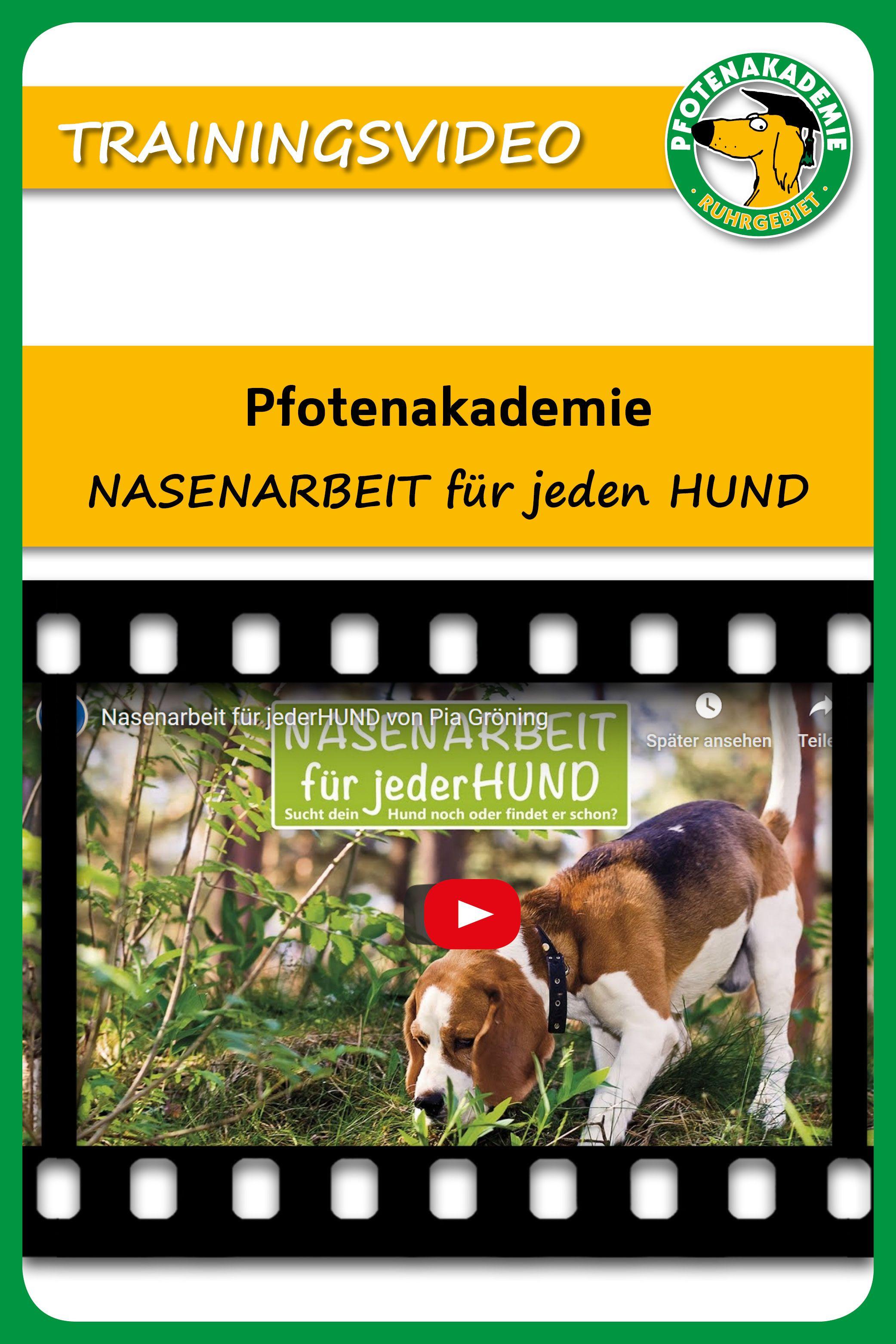 Spass Beschaftigung Hab Eine Tolle Zeit Mit Deinem Hund Pia Groning Hunde Fahrtensuche Hundchen Training