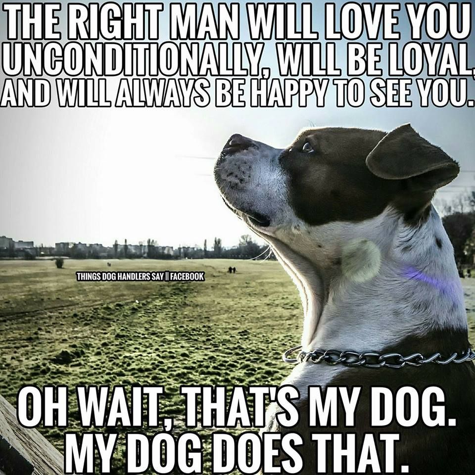Dogs Are Wonderful Dog Quotes Funny Funny Dog Pictures Dog