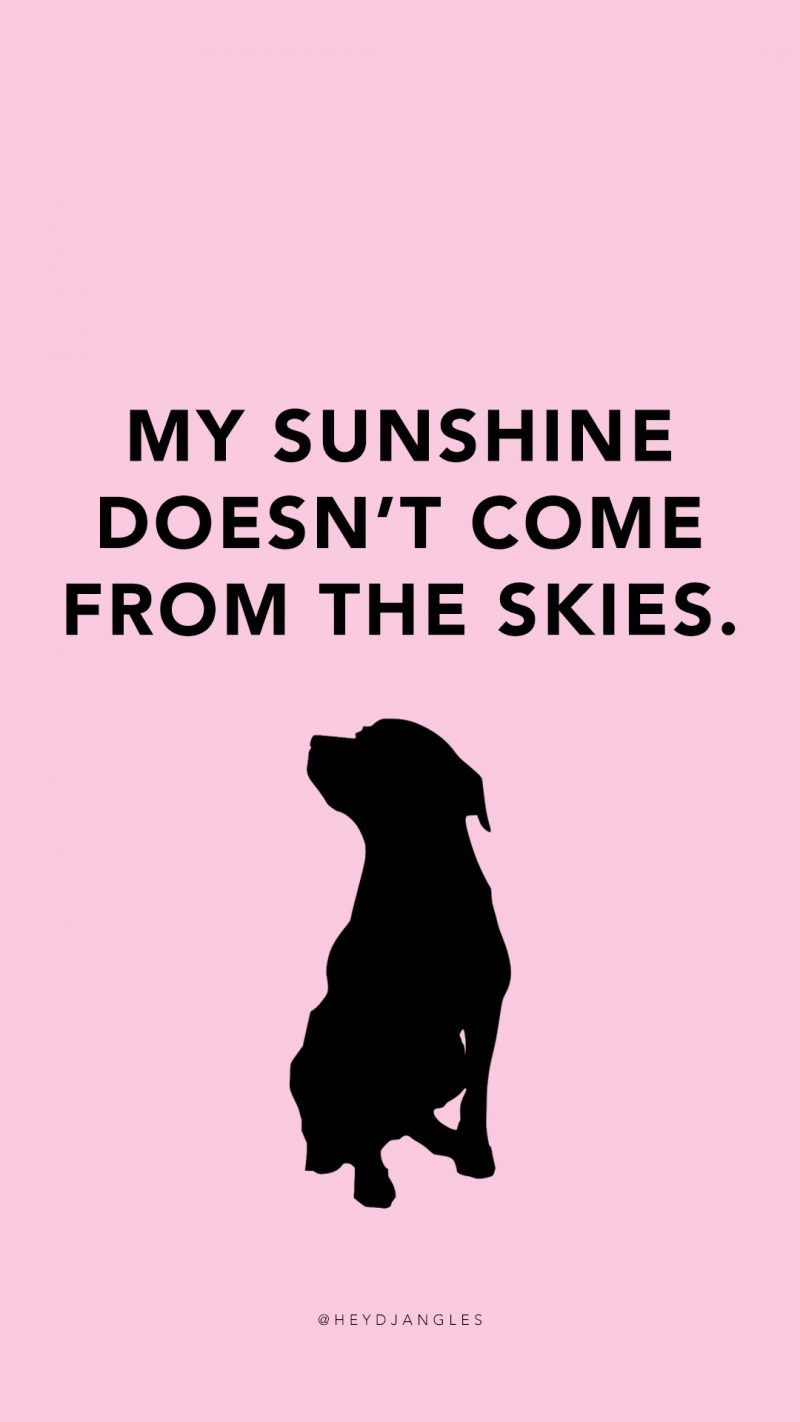 Free Resources  Dog quotes, Puppy quotes, Dog quotes funny