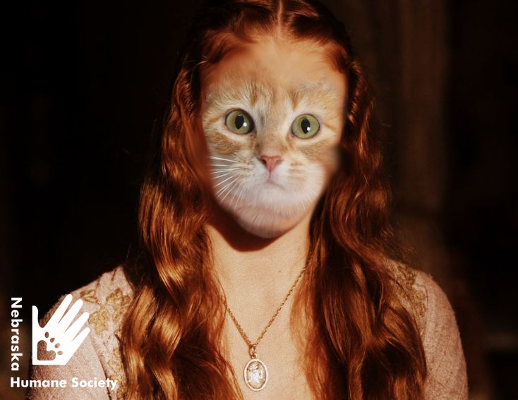 We have a cat in adopt named Sansa - the #GameOfThrones jokes were unavoidable