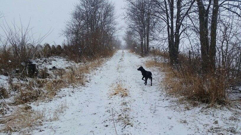 Winter walk with the dog.