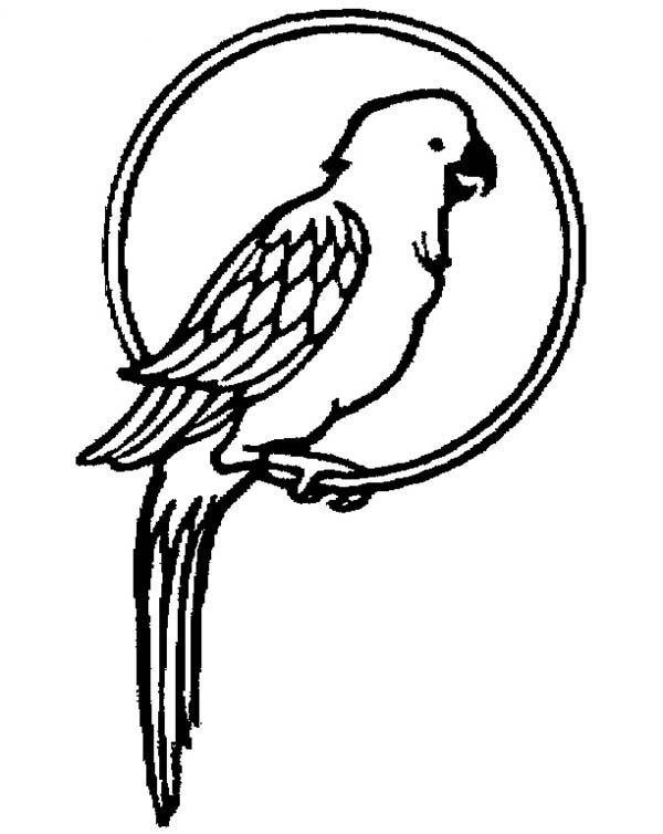Parrot is Flying Coloring Page  coloring pages  Pinterest