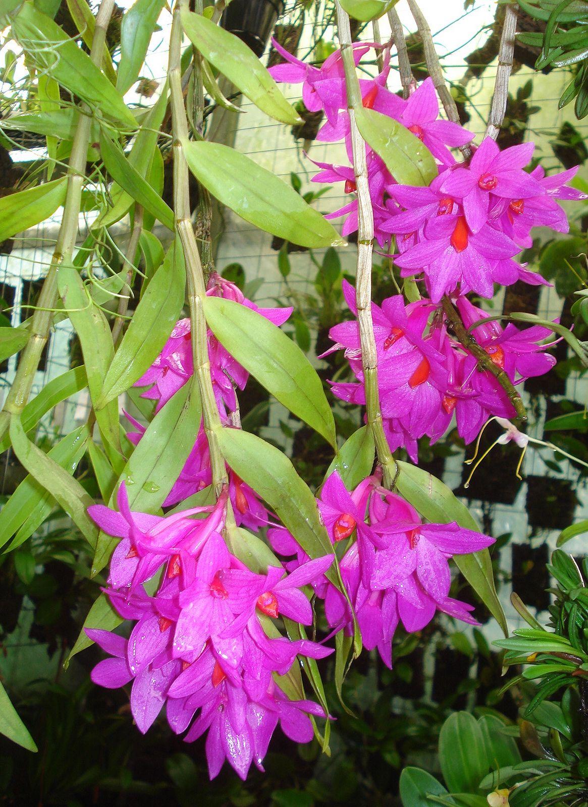 Les 25 meilleures id es de la cat gorie d plantes sur pinterest plantes de d cor de maison - Plante d appartement fleurie ...