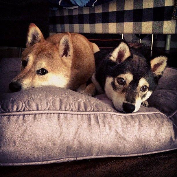 shio and emi