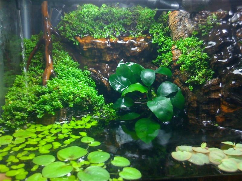 Really good article on setting up a paludarium for Bassin a poison