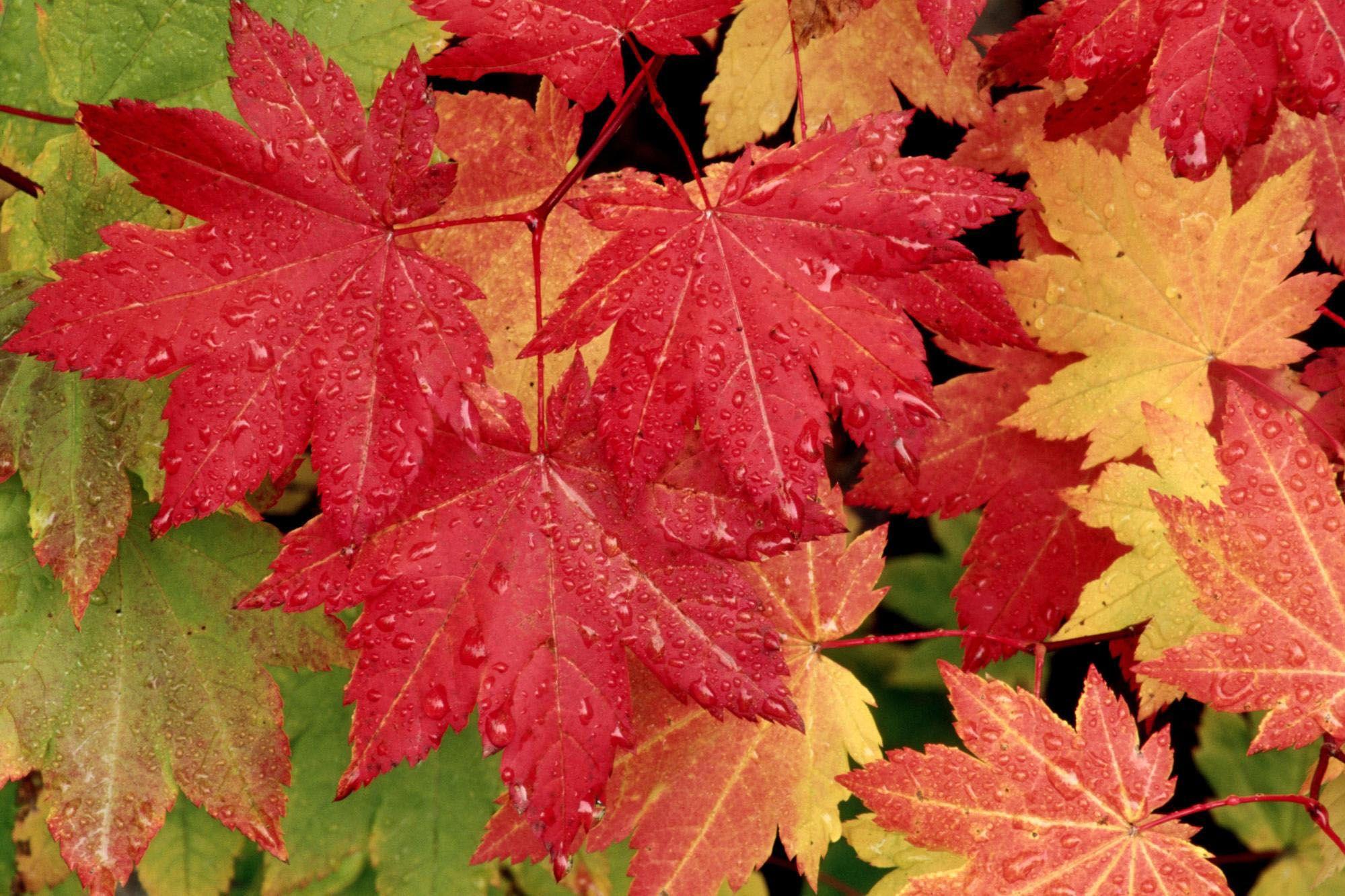 Great Wallpaper Mac Autumn - e697d6ee68e154ccc886cd1992814341  2018_85407.jpg