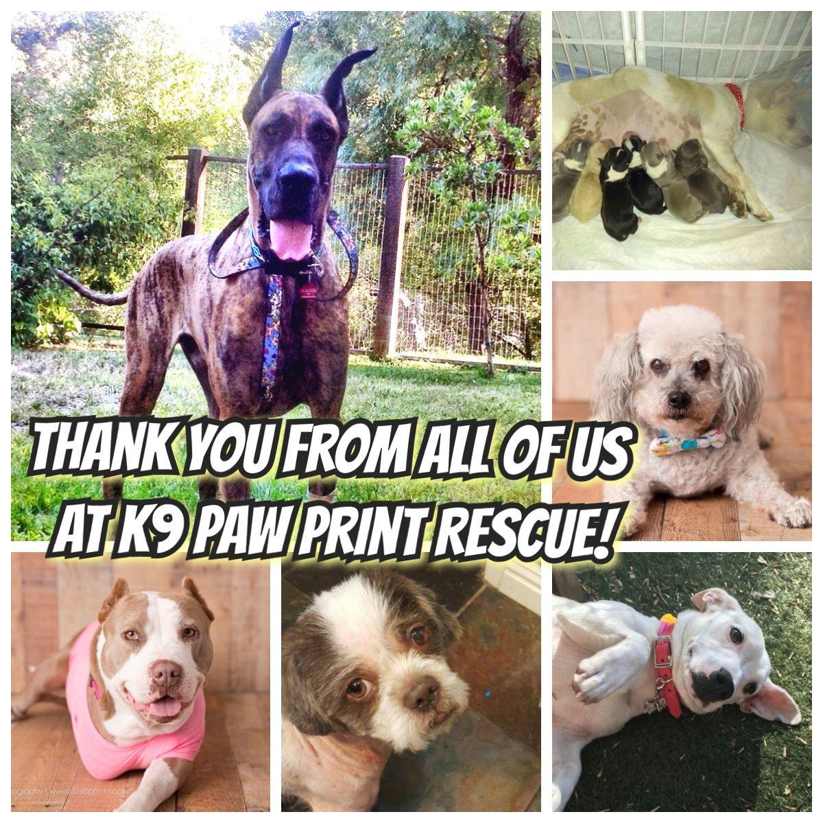K9 Paw Print Rescue Bay Area California k9ppr dogrescue