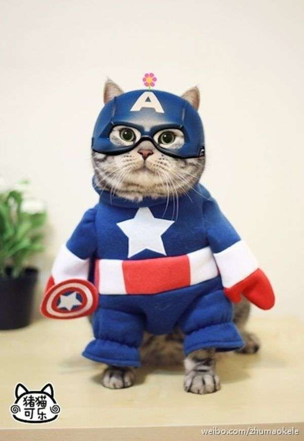 Cat,tain America. The Cutest Cats Dressed as Superheroes