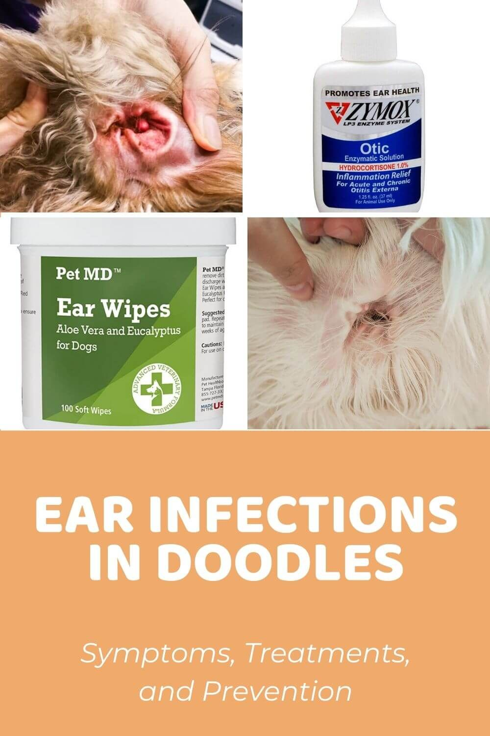 Dog Ear Infection In Doodles Symptoms Treatments And Prevention Dog Ear Infection Remedy Dogs Ears Infection Dog Ear Infection Treatment