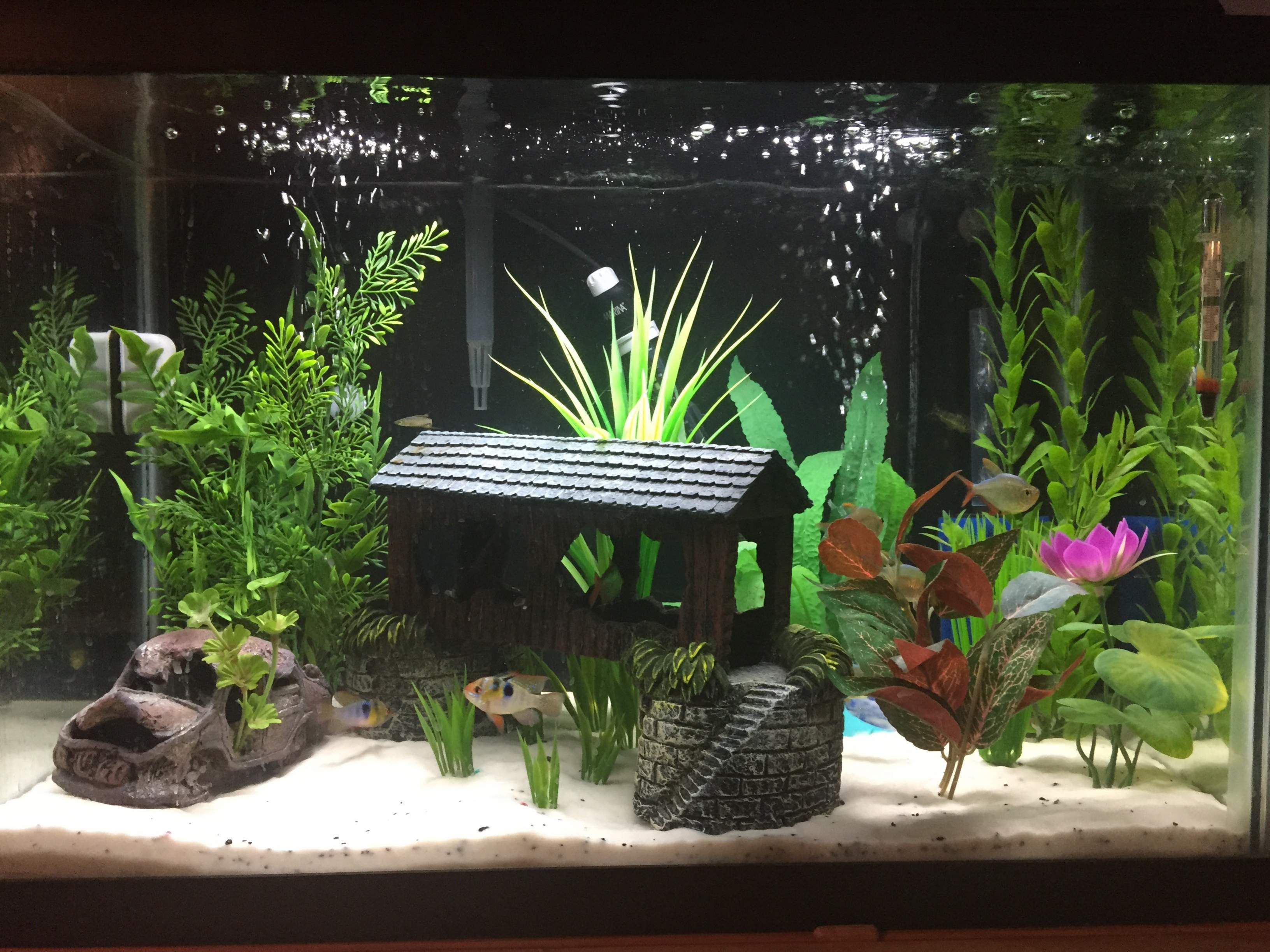 Well planted 20 gallon aquariums google search pinteres for Tall fish tank decorations