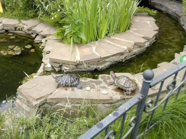 Feng Shui Home With Pets Step 1 Turtle Pond Small Backyard