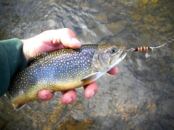 Fish creek spinners finally proof that fly fishing for Lake trout fishing lures