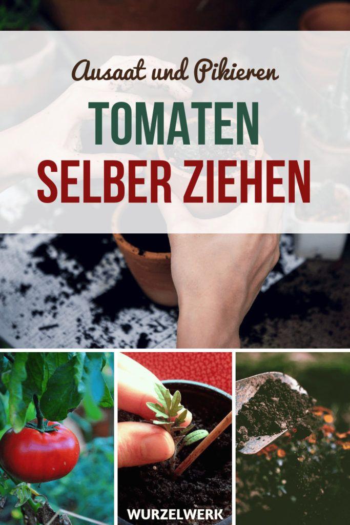 Kräftige Tomaten selber ziehen und pikieren #kräutergartendesign