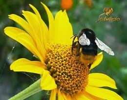 Zapraszam do nas na bloga http://salvadofotografia.blogspot.com/search/label/mieszka%C5%84cy