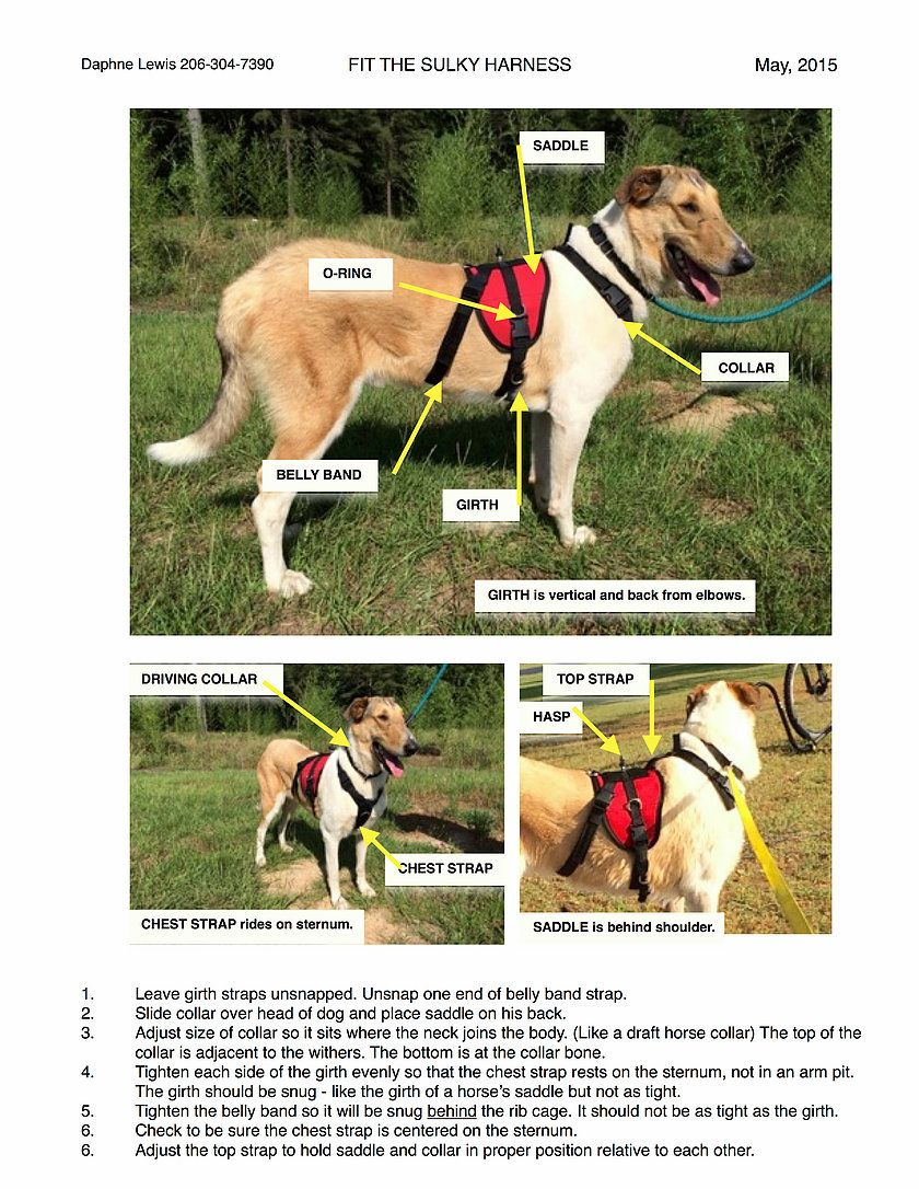Chalo Sulky Harness Info Sulky Sporting Dogs Harness