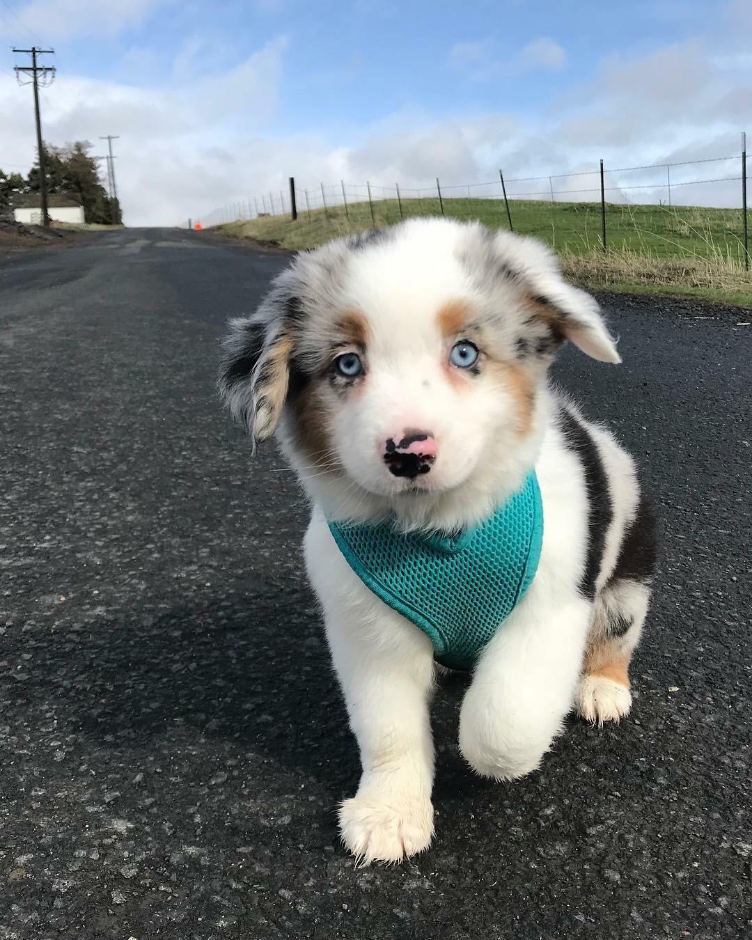 My pup, Zephyr.