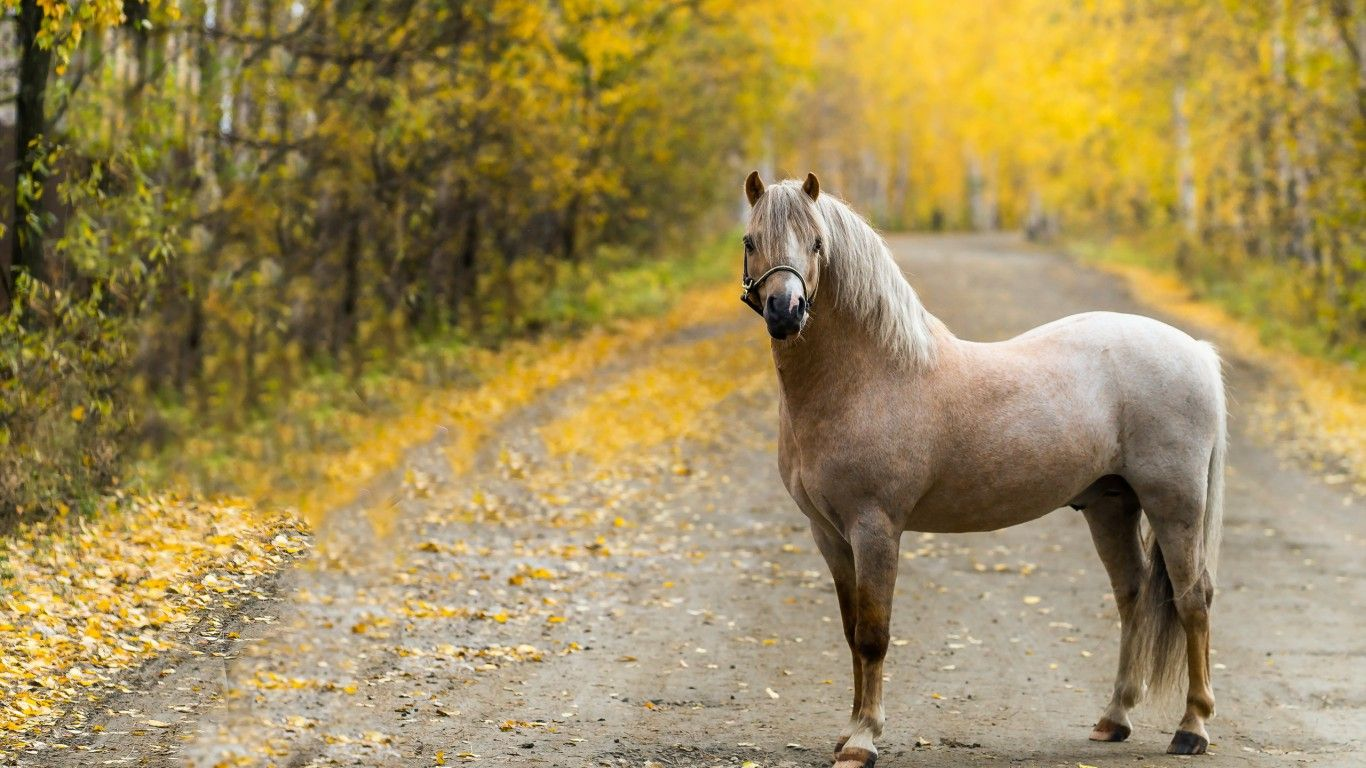 Top Wallpaper Horse Autumn - e69cf652479553f28922a2eb7a7bdd97  Best Photo Reference_69932.jpg