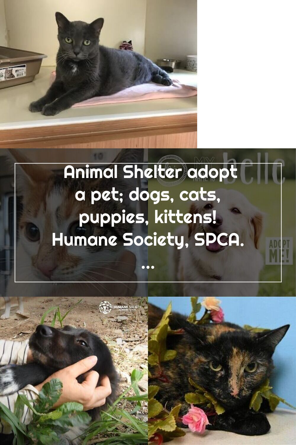Pin On Humane Society