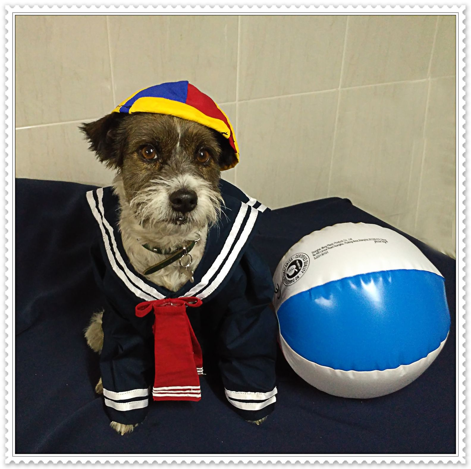 EL CHAVO DEL 8 Disfraz para perros halloween, Disfraces
