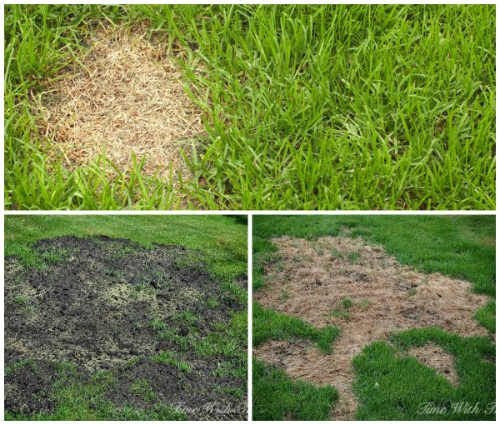 The Easiest Way To Repair Grass Damaged By Dogs Grass Lawn Care Garden