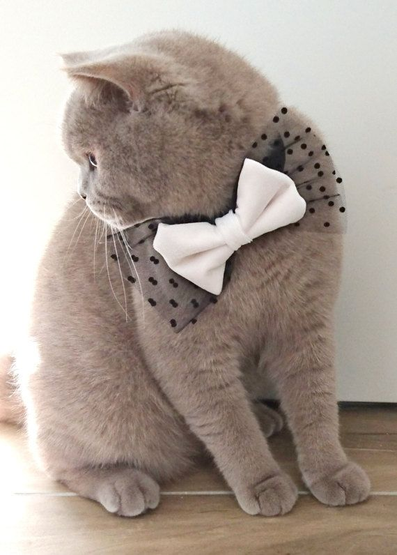 Cat Bow Tie Collar Velvet and Tulle, Dog Bow tie, Pet Bow tie Collar Cream and Black ideal for special occasions