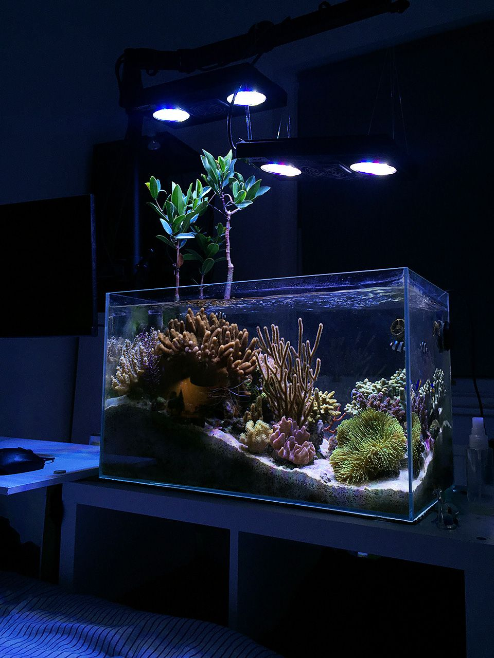 Freshwater aquarium fish uk - East1 Congratulations To Community Member East1 And His 17 Gallon Reef Aquarium For Being Selected For