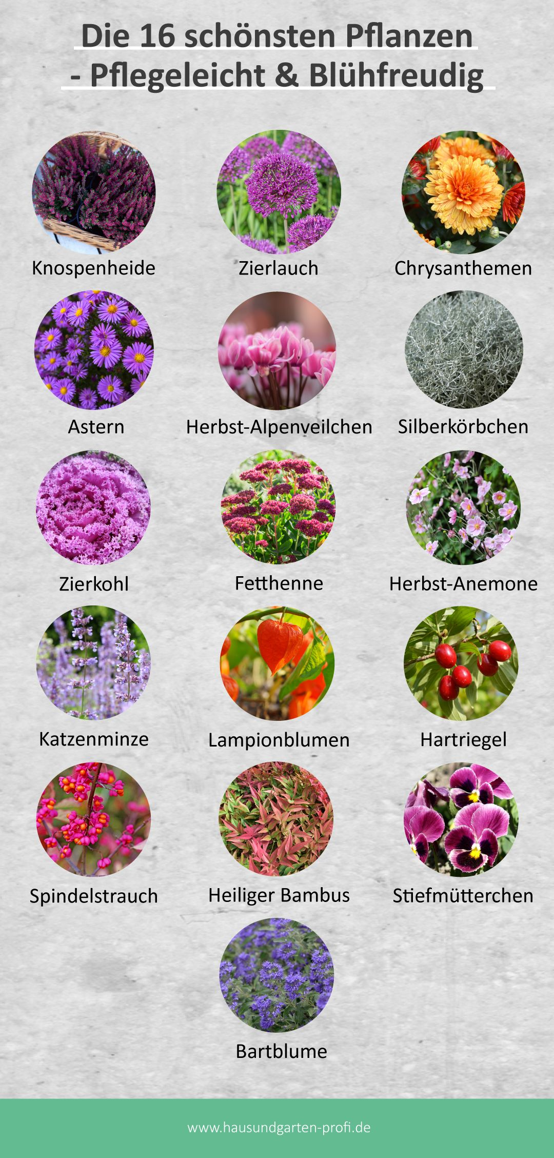 Herbstbepflanzung – Die 16 schönsten Pflanzen für den Herbst!