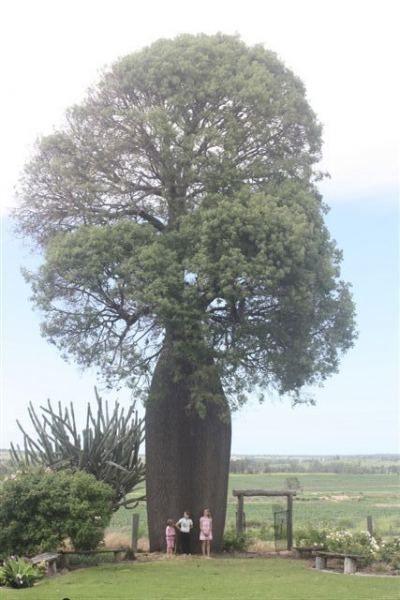 Tree Register National Of Trees Australian