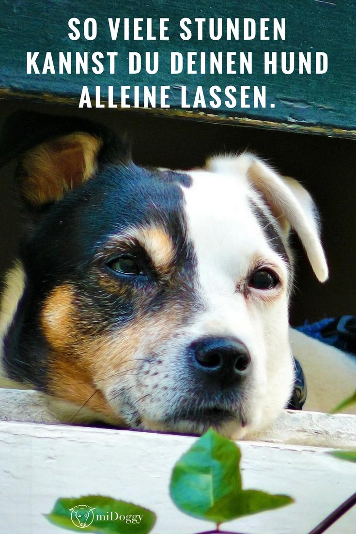 Wie Viele Stunden Kann Man Einen Hund Eigentlich Allein Lassen