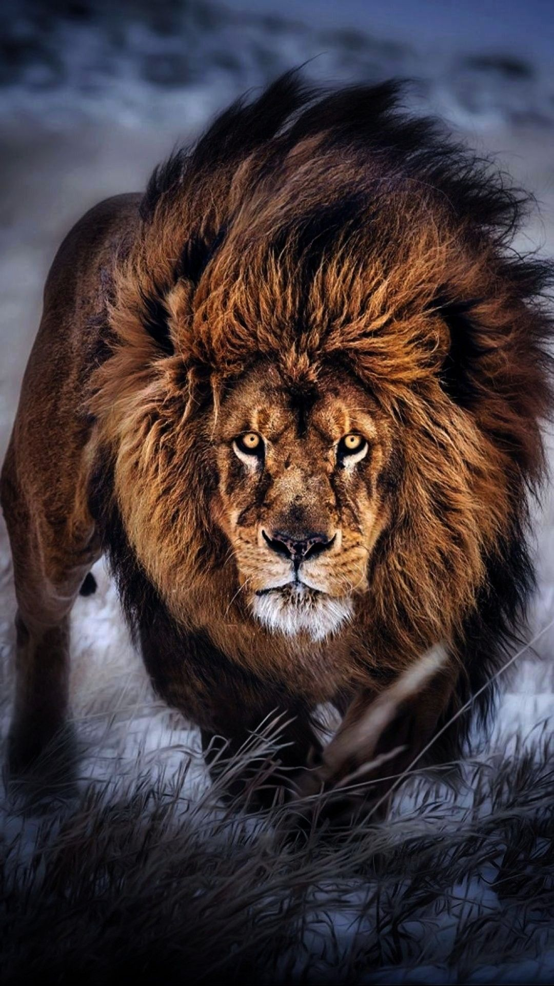 Backgrounds Wallpapers 1080x1921 Wallpaper Especial Desktop Android Ayoonei Unica Mobile Iphone Floco 1080p Pho In 2020 Lion Pictures Lion Wallpaper Lion
